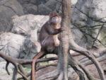 Bronx Zoo 3-21-2010
